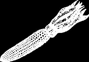 White illustration of corn